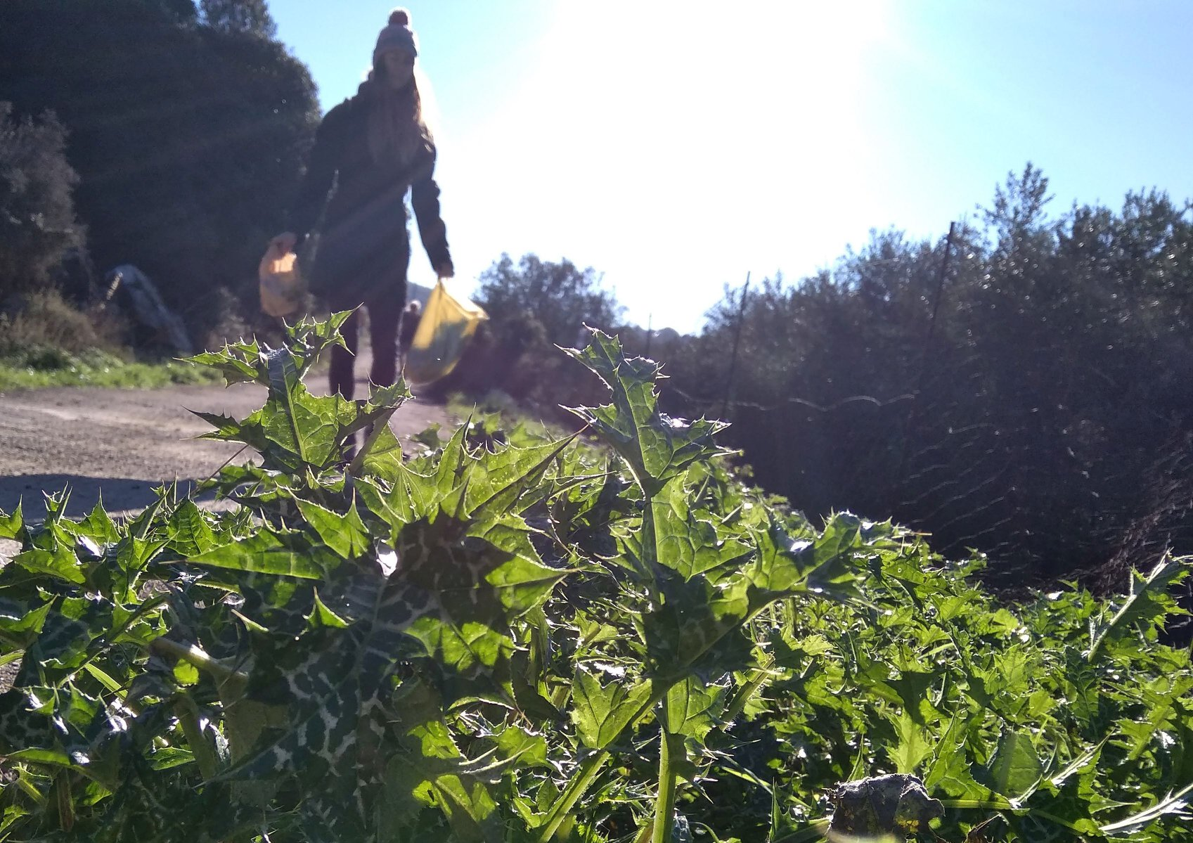 foraging wild plants