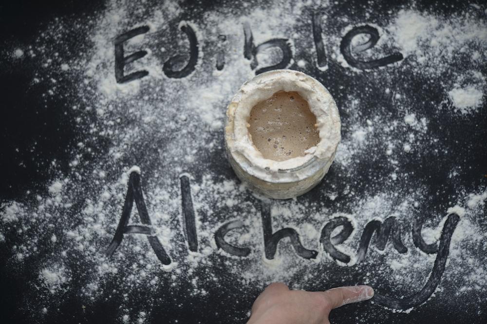 sourdough starter edible alchemy