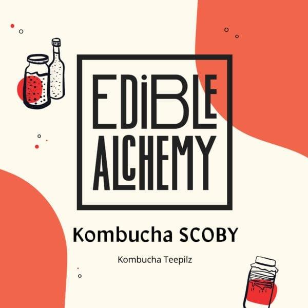 kombucha scboy