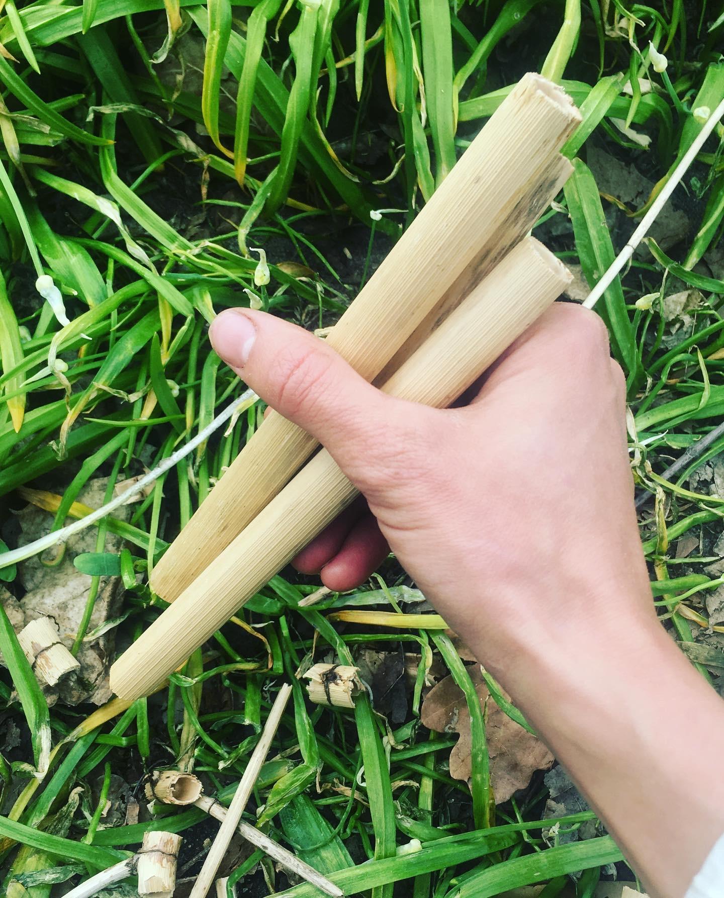 holding japanese knotweed straws