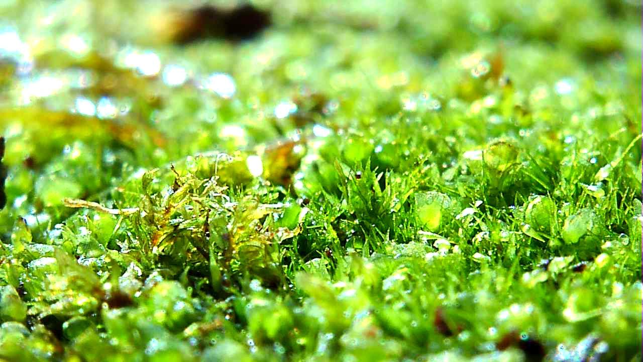 gut garden closeup