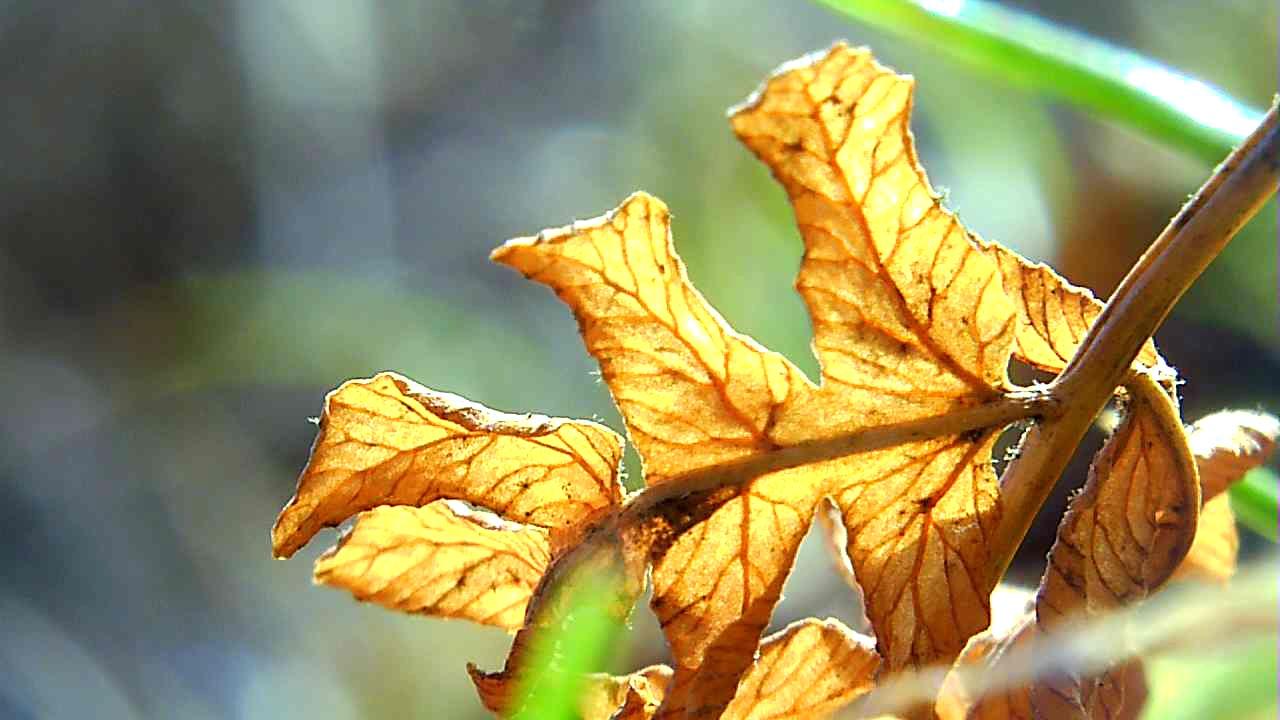 leaf in garden